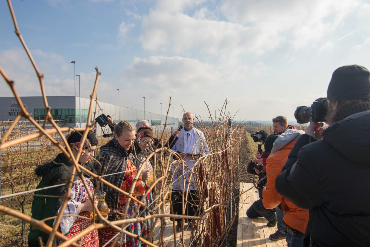 Home belje traditional feast day vinceka held in baranja fandeluxe Choice Image