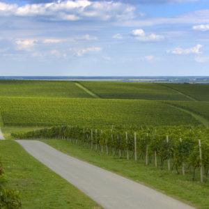 Vinska cesta Vina Belje