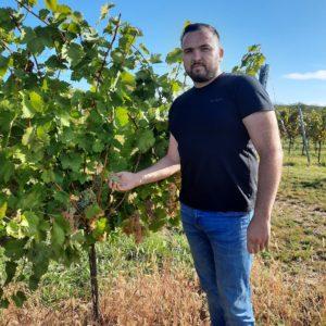 Tomislav Pintarić - Vinogradarstvo Vina Belje